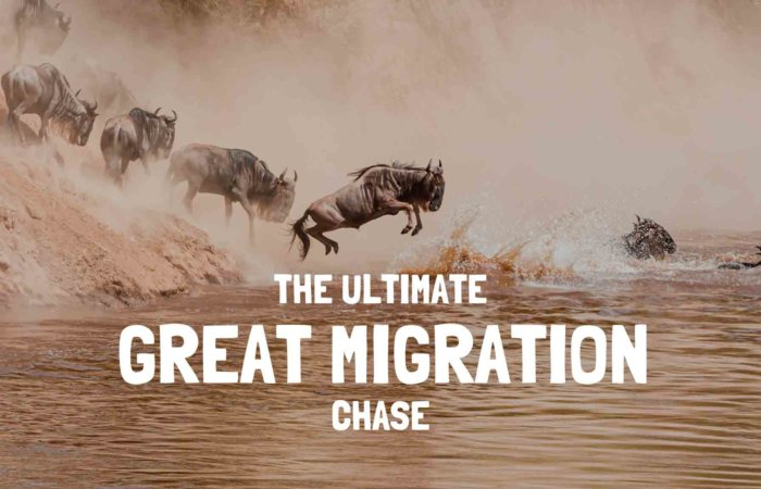 great migration safari tanzania