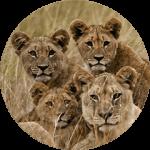 Tailor made safari 4