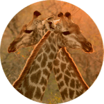 Tailor made safari 2